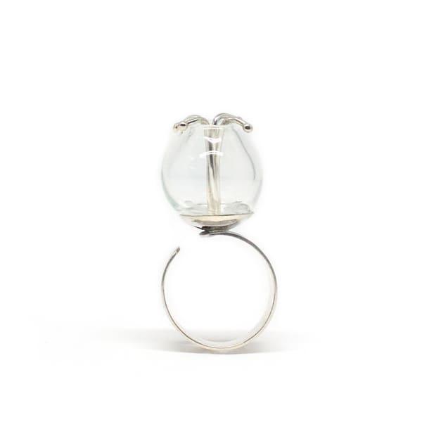 anillo grayi